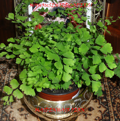 My household capers GARDENING NOT SO EASY CARE INDOOR PLANTS