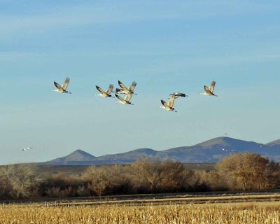 bosque del apache wildlife refuge