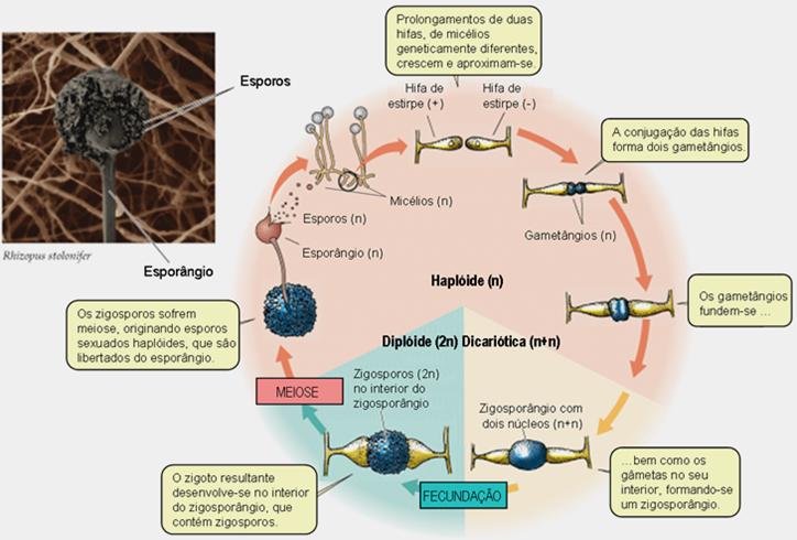 Sintoma de um fungo de pés