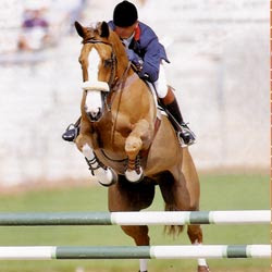 photo cheval saut obstacle