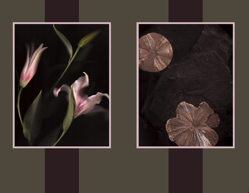 double scan of a pink lilly and stone