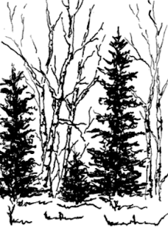 drawing of pine trees