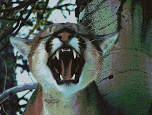 Mountain Lion Snarl