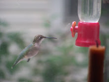 Hummer at my Window