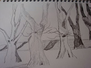 sketch, trees, melbourne