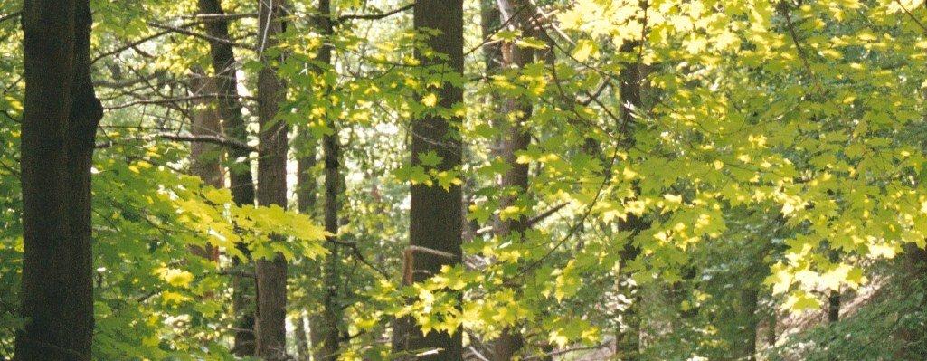 [forest1.jpg]
