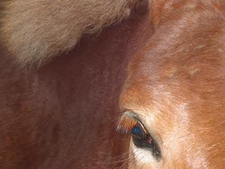 Eye of the Mule Oakland, CA by Rachel Medanic