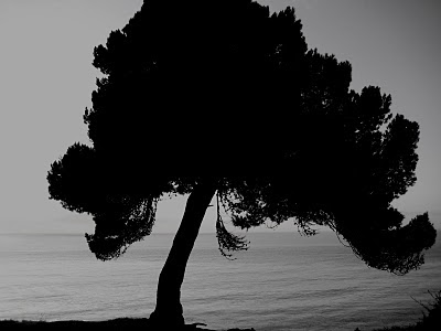 Meditation Tree (image ii) by LeAnn as seen on linenandlavender.net