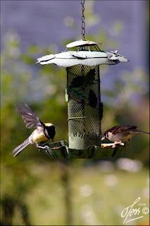 fåglar äter knäckebröd