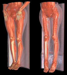 Disease Diary Blog: Muscular System Disease-Muscular Dystrophy