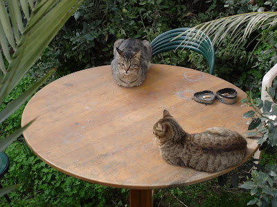 Two tabby cats on a table