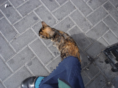 Tortie kitty sharing my skirt