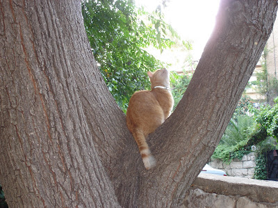 Mr. Neighborcat in a tree