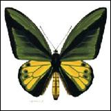 Las Mariposas más grandes...