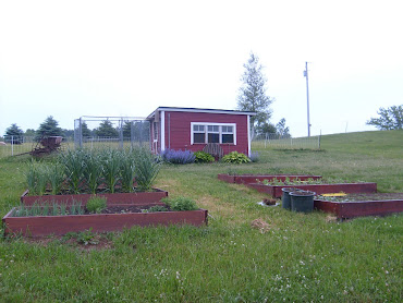 Raised beds & chickens coops