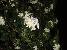 La Pureza del Blanco
