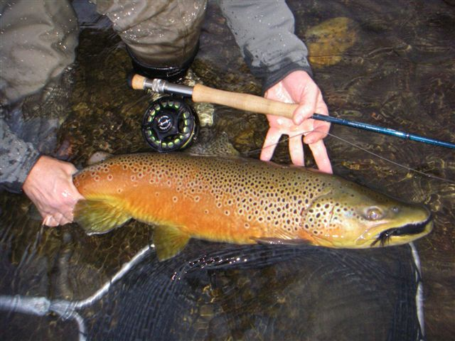 Utah fly fishing tips and photos guide services flaming for Brown trout fly fishing