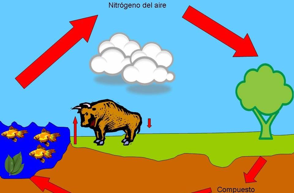 Ciclo Del Nitrogeno | Search Results |