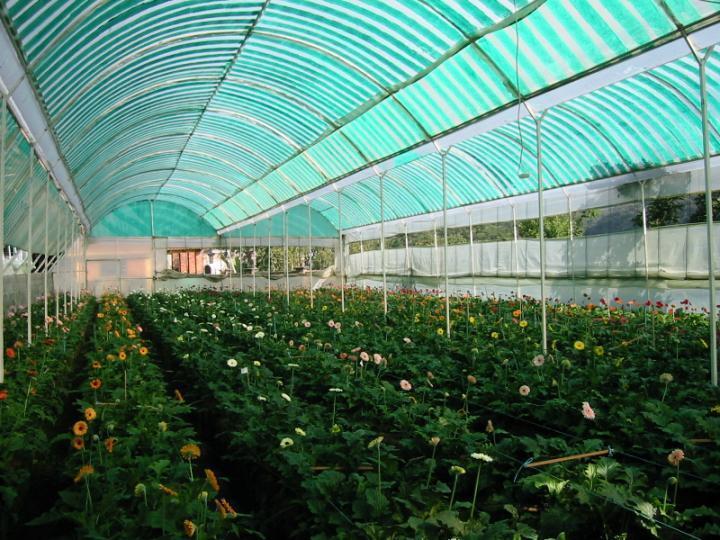 Invernaderos agricultura presenta software gestion for Vivero e invernadero