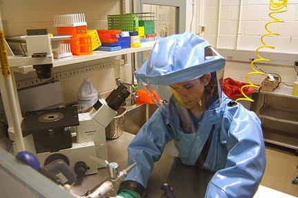 ebolavirus (BEBOV) in 2007