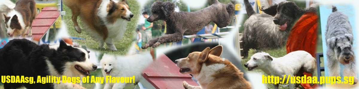 USDAAsg, Agility Dogs for Any Flavour!
