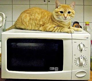 roast cat recipe