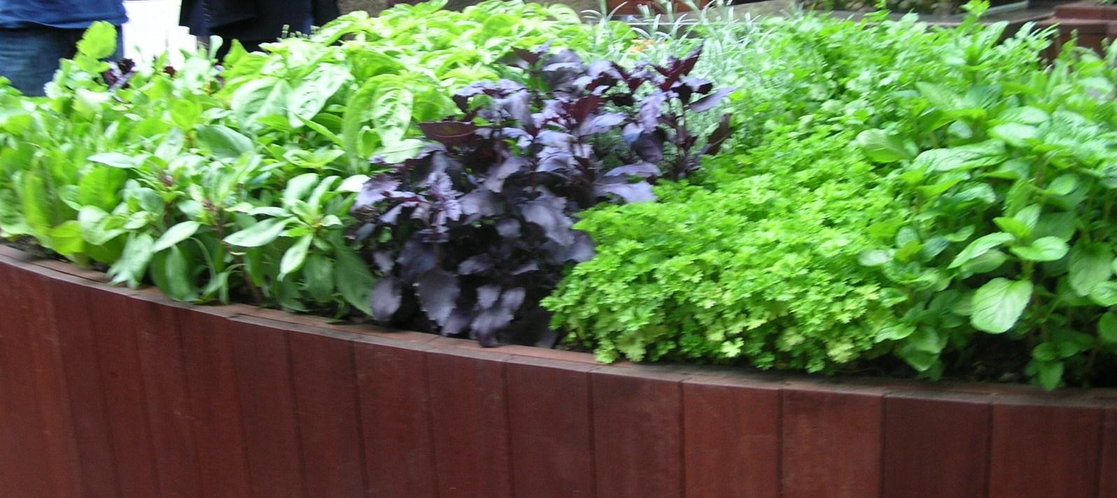 Ek gröna rum: 2010 12 12   2010 12 19