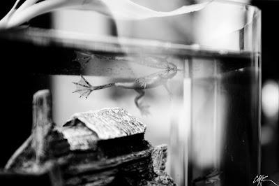 Frog O Sphere Brookstone Mass Load: Frog-O-Sphe...