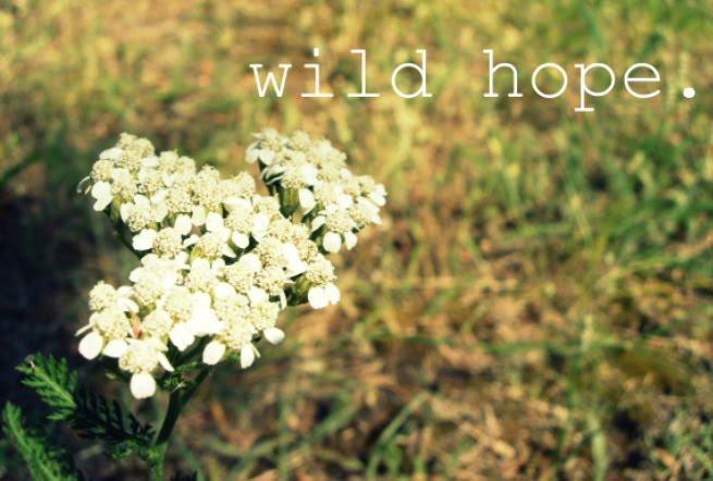 wild hope.