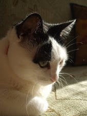 Pati's cat