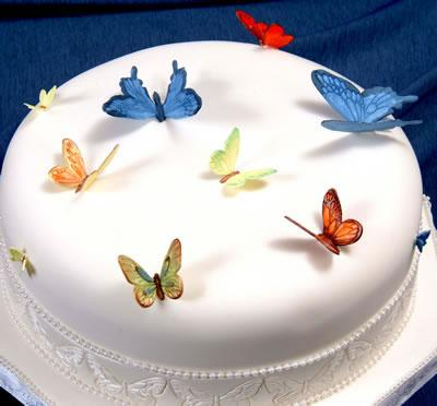 White single tier cake with colorful butterflies on top by Baker 39s Man