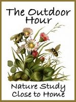 Nature studies with children