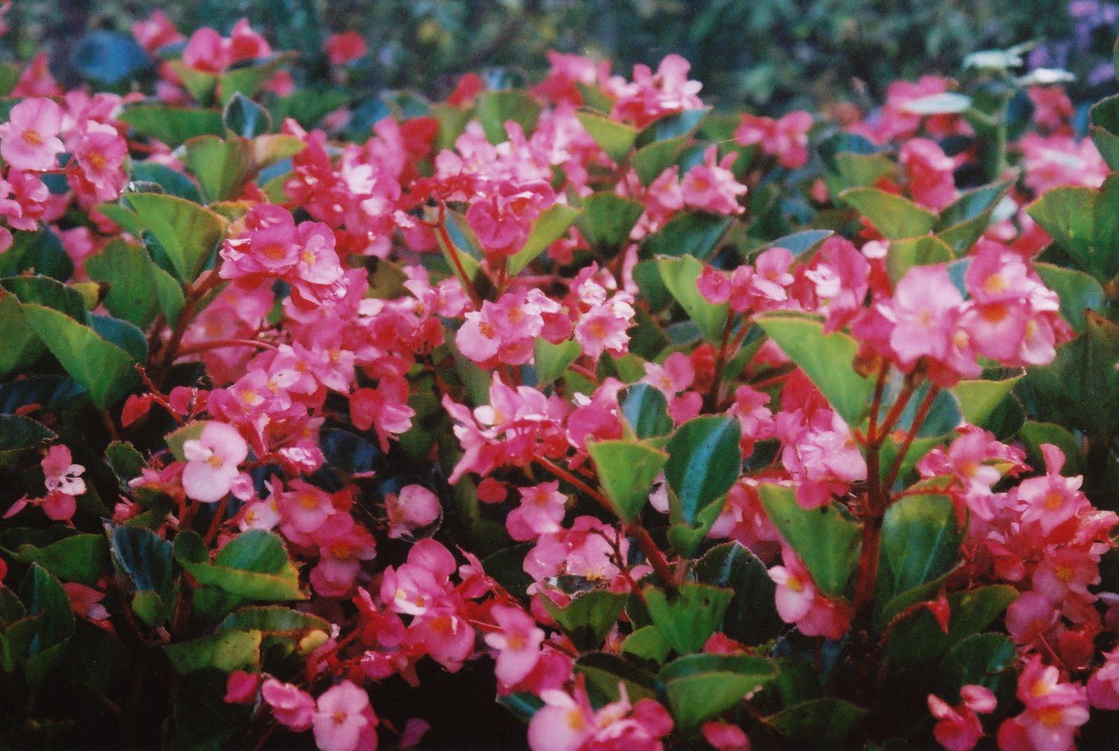 Cutaways Closeups Late Summer Flowers