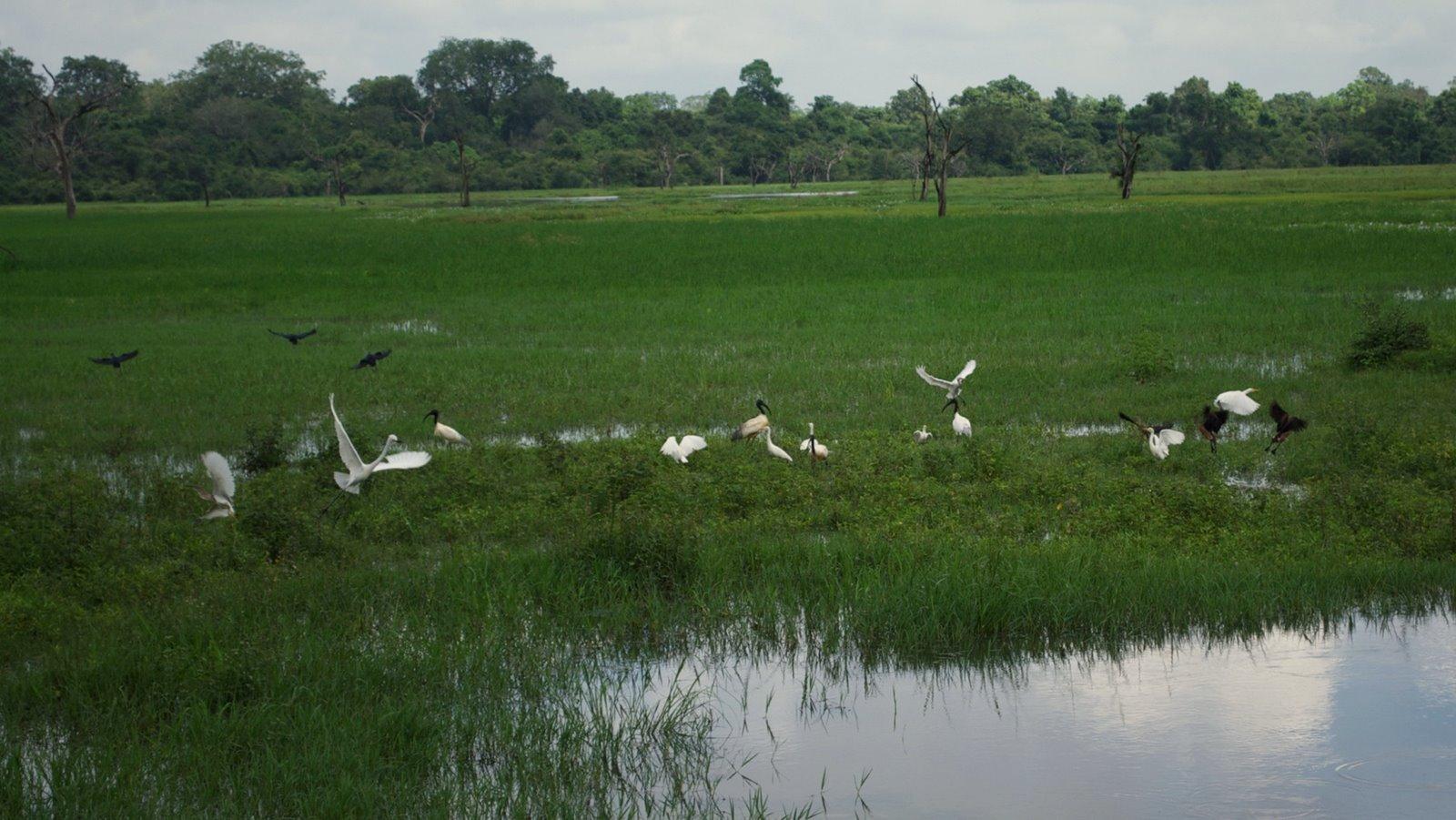 Wasgamuwa National Park Map Sri Lanka - Nat...