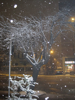 Winter in Parma