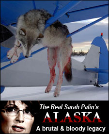 sarah palin hunting wolves