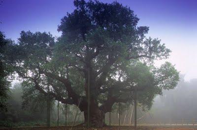 Hvilke træer er løvtræer