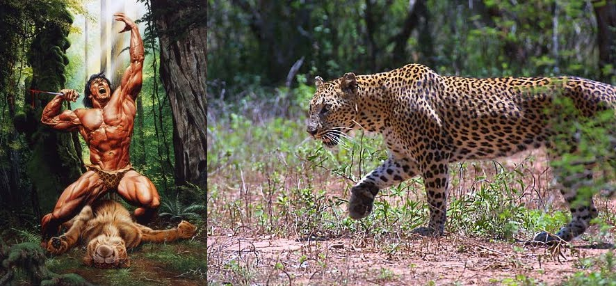 mountain gorilla vs leopard Gallery
