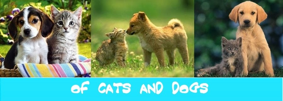 Of Cats and Dogs...