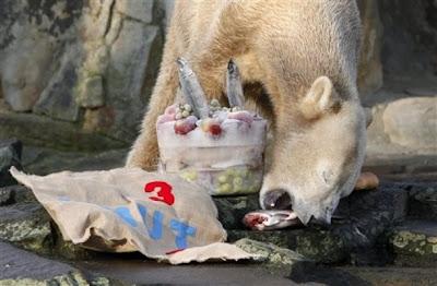 Happy Birthday Old Hag Polar+bear+Knut+checks+out+his+birthday+presents+in+his+outdoor+enclosure+in+the+zoo+in+Berlin,+Saturday,+Dec.+5,+2009.++2