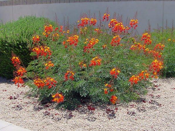 Bird And Butterfly Gardens » Sage Outdoor Designs