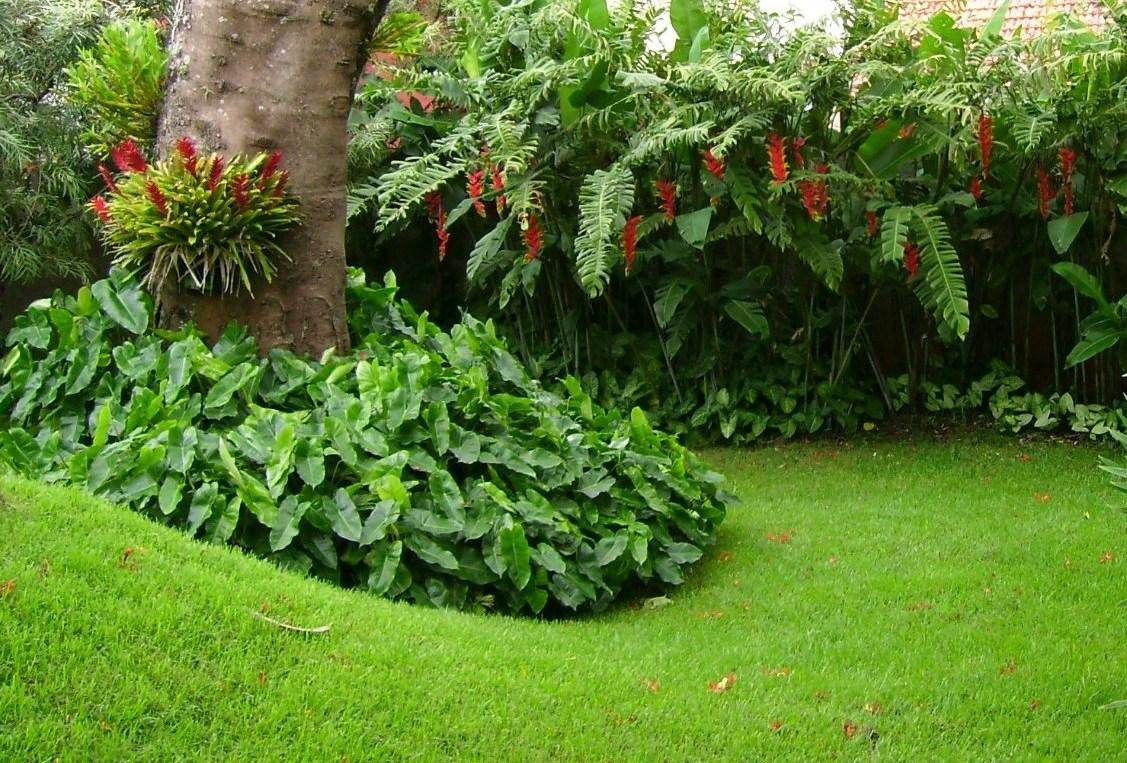 plantas jardim tropical : plantas do jardim tropical ? Doitri.com