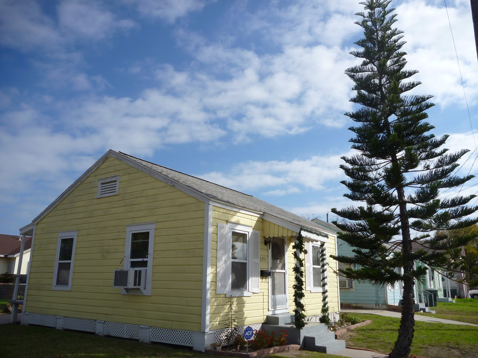 That Being Said, There Are A Few Considerations When Planting A Norfolk  Island Pine In The Landscape. Since They Do Get So Tall, Scale May Be An  Issue.