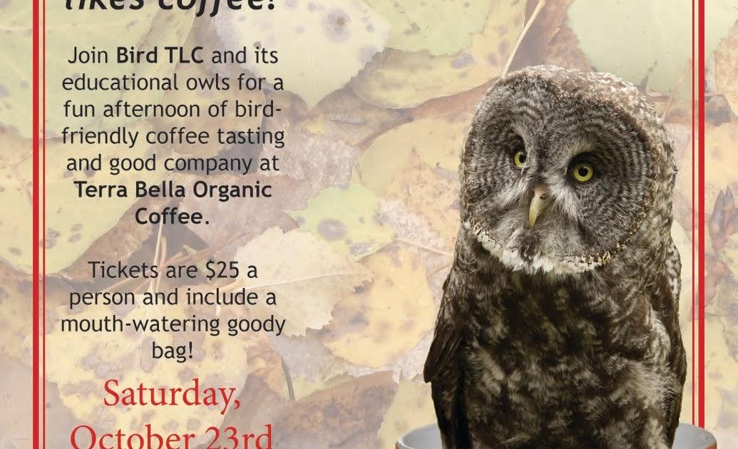 Wild Owl Cafe Menu Norwich Ny