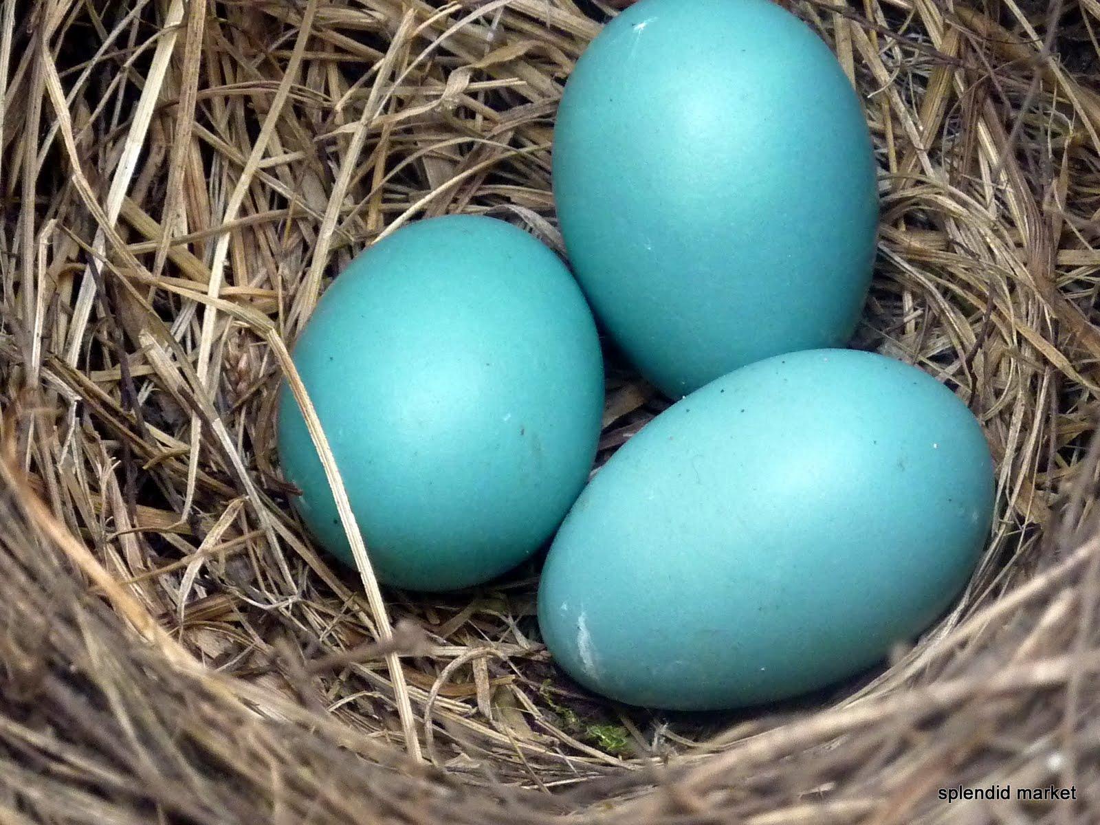 color 7fd5cd robins egg colourlovers