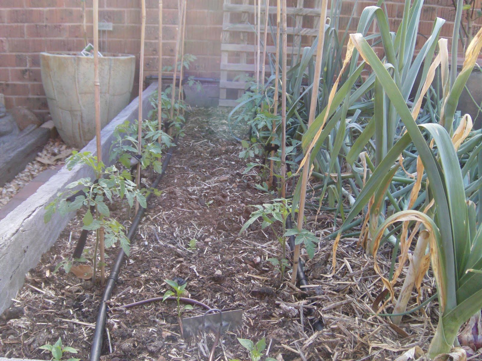 low pressure drip irrigation part 3 the greening of gavin