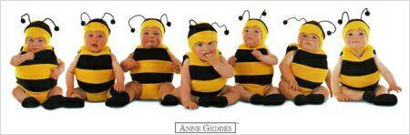 honeybeees