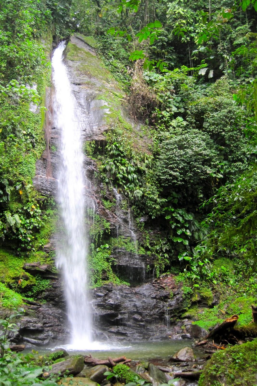 Journey into elderhood rainforest environment for Waterfall environment