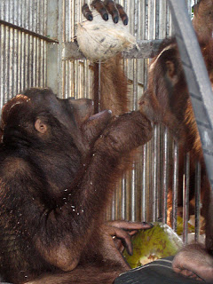 JoJo and Jingo share a coconut