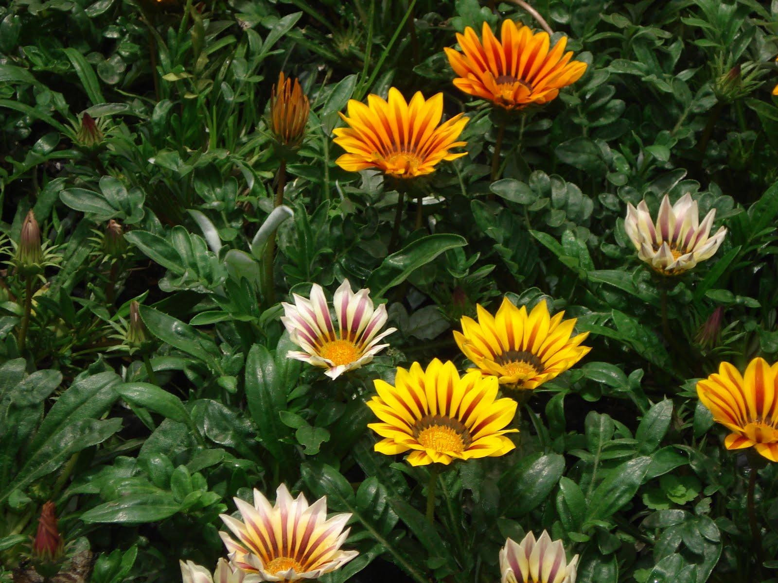 Produplantas plantas para exterior - Plantas de exterior baratas ...